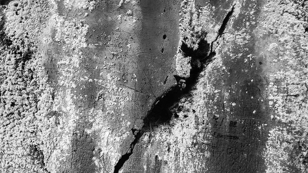 Photography | Monochromatic - Petrified Texture